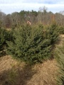 See? Fat bush.