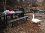 Goose of doom. Note size in comparison to child. No wonder I was afraid for the Kinder.